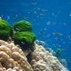 海水魚と淡水魚はどう違う?共存はできるの?