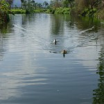 世界最長の川はどっち!?「アマゾン川」と「ナイル川」の国をまたいだ大勝負!!