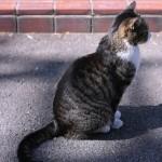 その肩こりや腰痛,頭痛.その原因は猫背かも!? 猫背を治す効果的な方法!