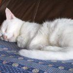 寝ている間に夢を見る理由! レム睡眠とノンレム睡眠と金縛りの関係とは?