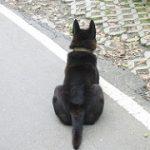 尻尾(しっぽ)が動物にあって人間にない理由! 犬や動物の尻尾の使い方いろいろ