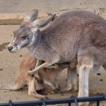 赤ちゃんの栄養のもらい方!お母さんとへそのおの仕組み!動物の赤ちゃんの生まれ方を紹介します。
