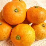 みかんを食べると体が黄色くなる!? みかんとオレンジの違い、特徴とは??